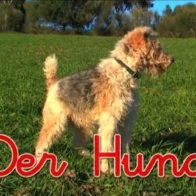 Animales en alemán.Perro.