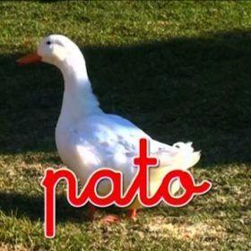 Un pato en la naturaleza