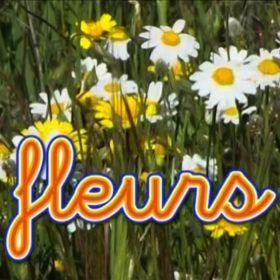 Flores, margaritas silvestres. Idioma francés para bebés.